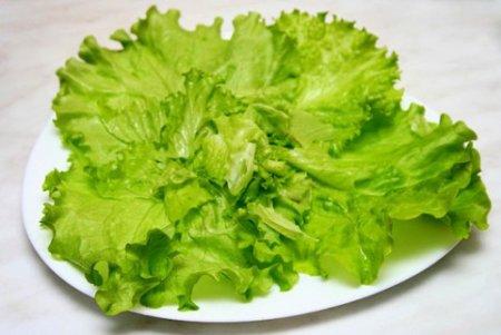 Лист салата фото